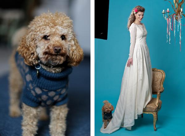Cecil, Rachel Spivey's studio apricot poodle